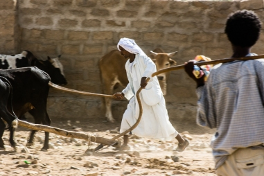 Mercato bestiame-10