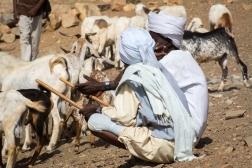 Mercato bestiame-16