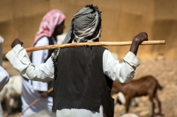 Mercato bestiame-18