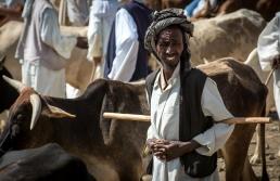 Mercato bestiame-19