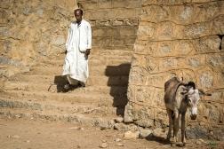 Mercato bestiame-2