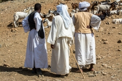 Mercato bestiame-20