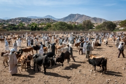 Mercato bestiame-3