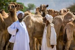 Mercato bestiame-4
