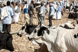 Mercato bestiame-5