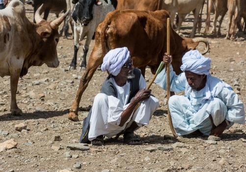 Mercato bestiame-6